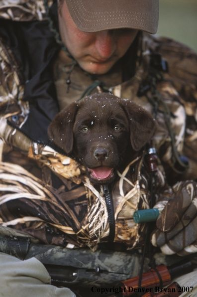 i love duck hunting dogs ....To Cute Bet he wont get out ...