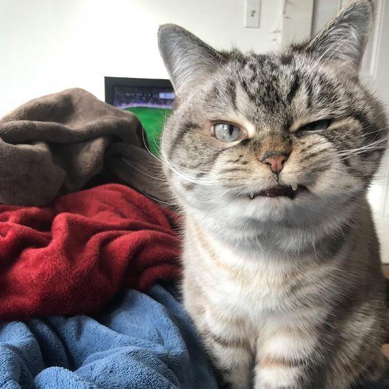 "29.7k Likes, 267 Comments - Loki (@loki_kitteh) on Instagram: ""What happened last night? 😆 #goodmorning #cats #catsofinstagram #cats_of_instagram #gato #cute…"""