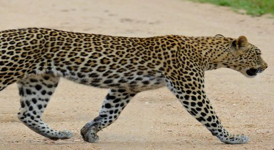 Viva Sustainability Un camino que atraviesa el reino del jaguar - Viva Sustainability