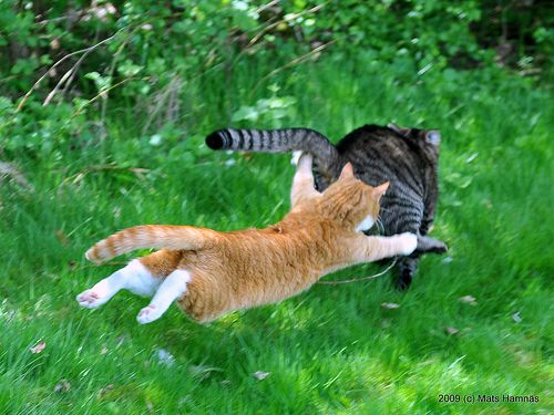 Is believe I can fly.............................