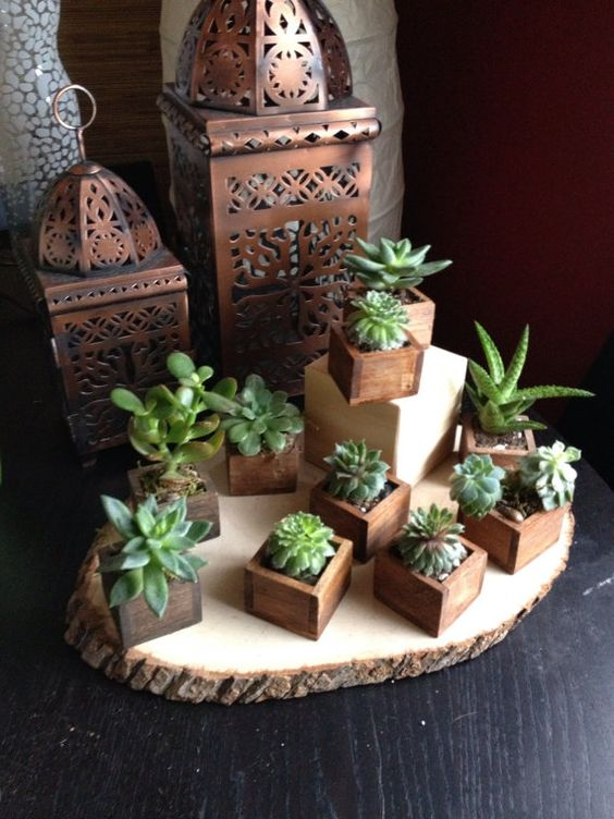 Succulents are awesome and the tiny wooden boxes make them for Wooden cactus planter