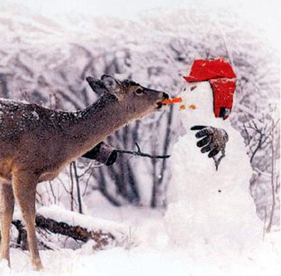 Deer eating snowman's carrot nose...