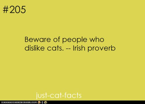 Beware of people who dislike cats...: Cat Quotes, Cats Irish, Irish Proverbs, Hate Cats, Dislike Cats, Cat Haters, People Cats, Cats Dislike