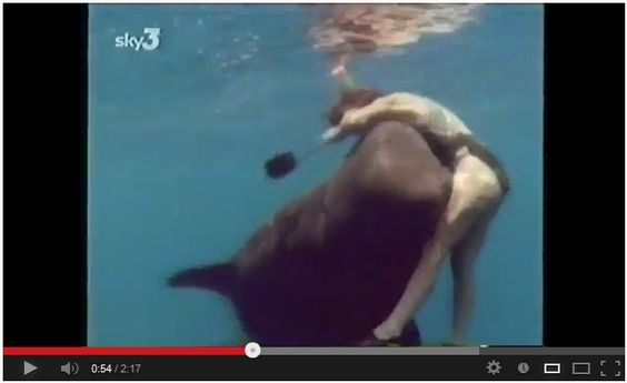 OMG!!! Woman attacked by Whale!!! Watch here: http://awesomeanimals001.blogspot.co.il/2013/04/wow-woman-attacked-by-whale.html