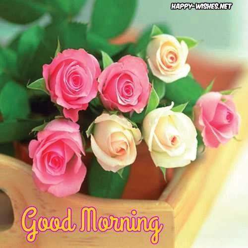 25 Good Morning Nature Images Rose Flower Pictures Rose Seeds Flower Delivery