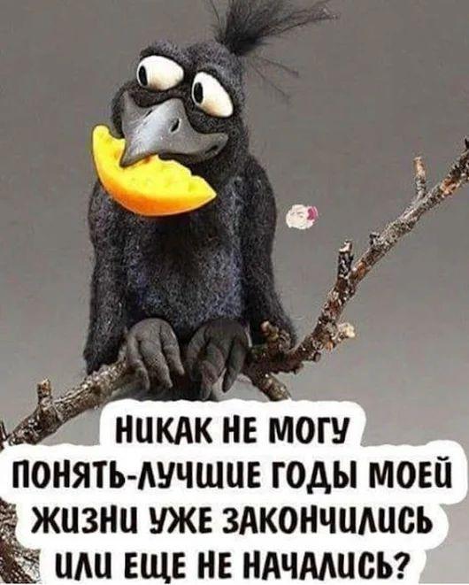 Фотография - Шутки - #Фотография #шутки