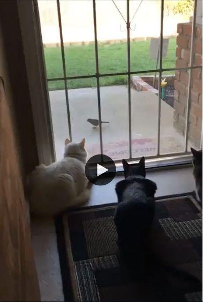 Esse cachorrinho sabe como acabar com a felicidade dos gatos.