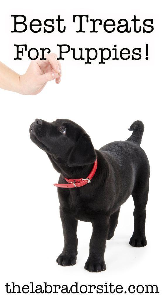 Best Treats For Puppies Puppy Treats Dog Training Treats