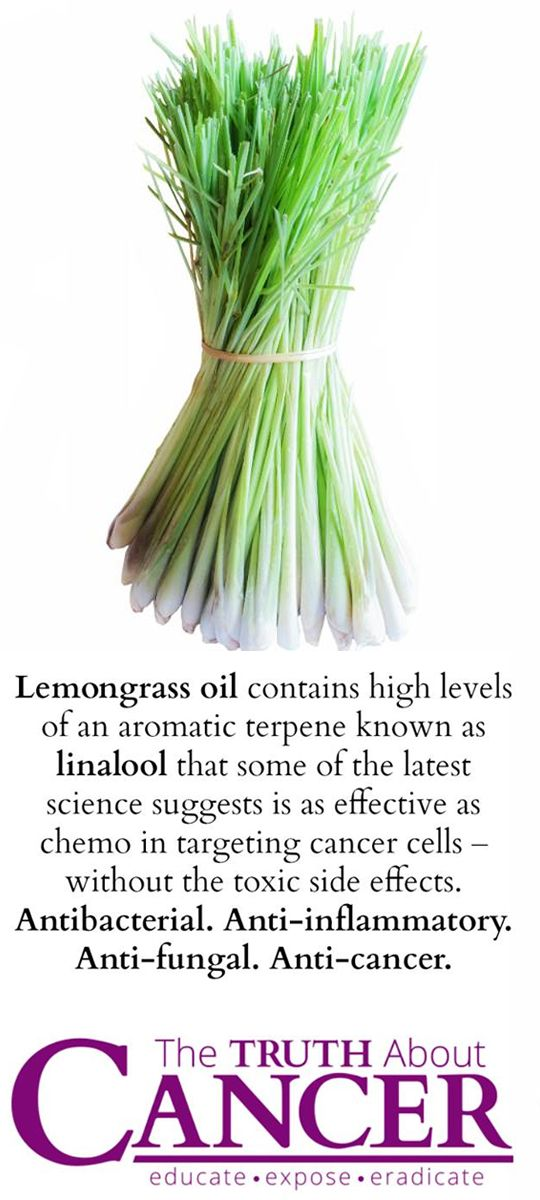 Lemongrass has proven to be naturally anti-amoebic, antibacterial, antifungal, and anti-inflammatory. This powerful antioxidant is also showing incredible promise in shrinking cancer tumors. Join us on The Truth About Cancer for fantastic life-saving info!