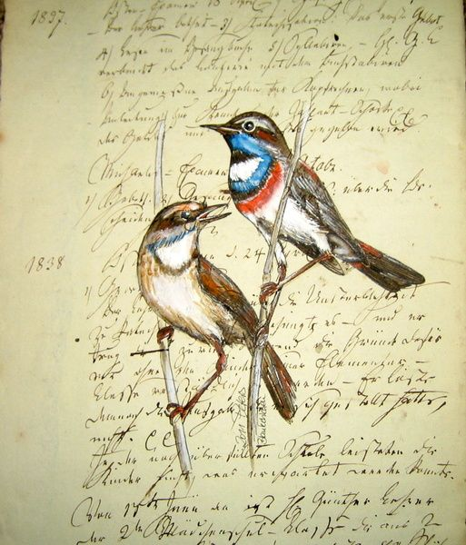 Blaukelchen(schrift)