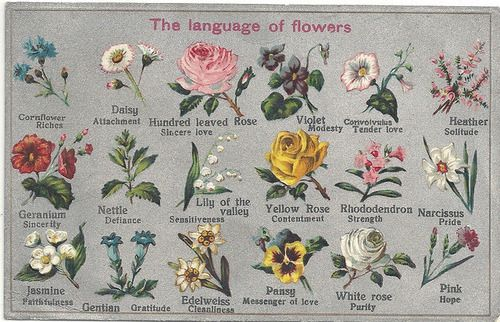 Iridescence Language Of Flowers Flower Meanings Spring Wedding Flowers