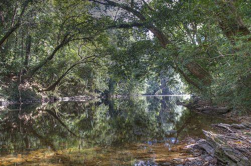 Taman Negara, Malaysian National Park. -- Deutschsprachige Reisetipps für den Taman Negara: http://www.malaysiaurlaub.net/urlaub-malaysia-urlaub-taman-negara/