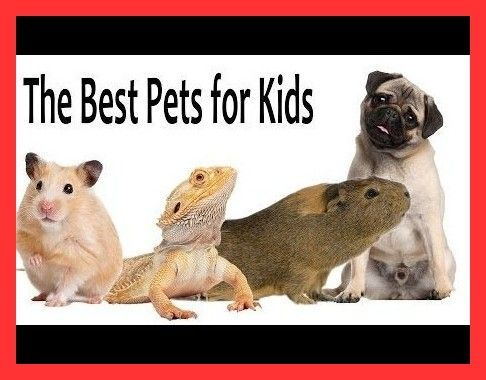 The Best Pets For College Students That Are Easy To Carry In 2020 Best Small Pets Animals For Kids Pets