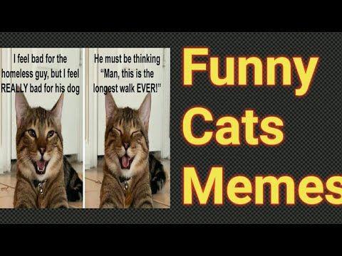 Best Funny Cat Memes Cat Memes Funny Cat Quotes Crazy Funny Cat Memes Youtube Cat Quotes Funny Funny Cat Memes Cat Quotes