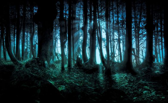 vampire forest  | The Twice Baked Vampire Blog