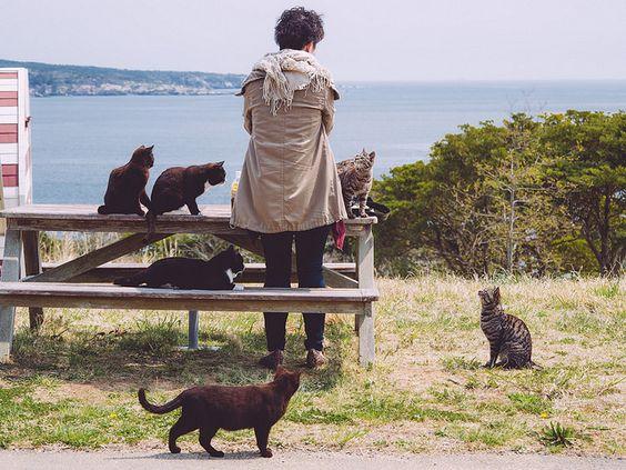 tashirojima tourist with cats