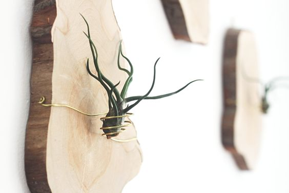 DIY Mounted Air Plants by Jade and Fern
