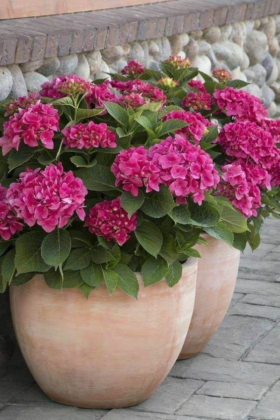 Pin By Liz Bli On People Places Things Life Plants Container Plants Flower Pots