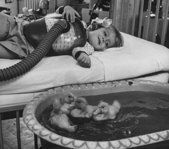 """A little girl (with polio, on a respirator) receiving tests gazes into pool containing baby ducks — an early use of animals as part of medical therapy, 1956."":"