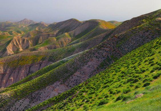 Spring in Judean desert