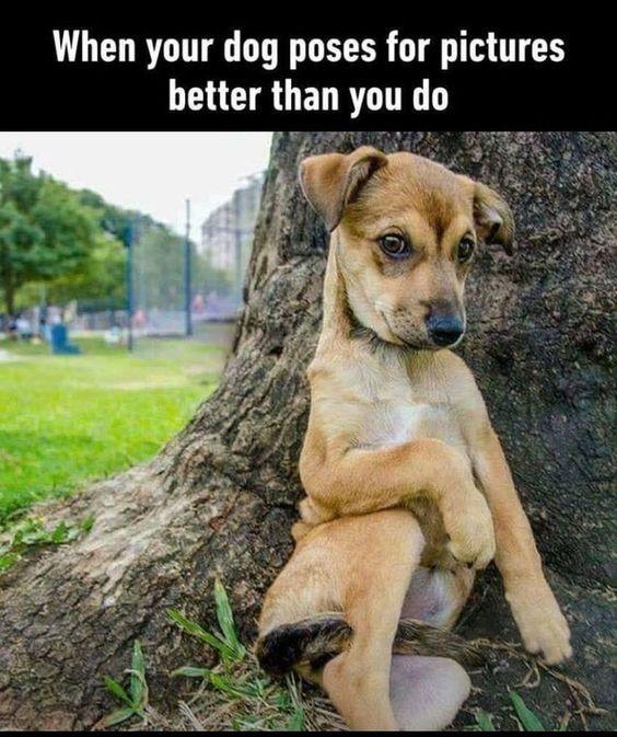 Wanna Go For A W 21 Memes Bei Denen Ihr Hund Definitiv Lachen