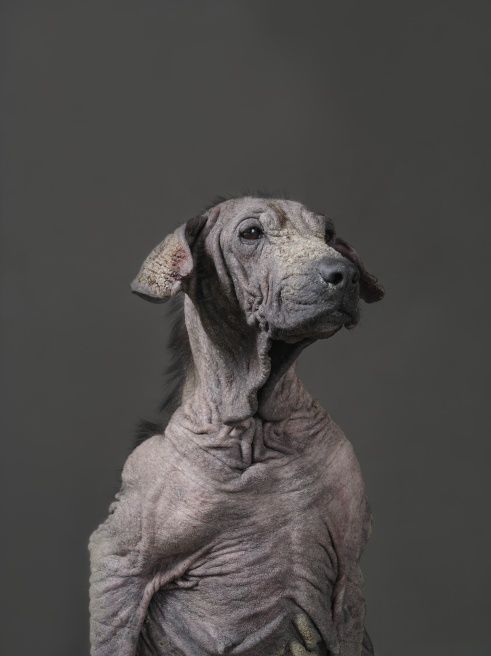 MEMENTO MORI by Yun-Fei Tou. Taiwanese public animal shelter portraits. Photographic images allow us to contemplate. Through contemplation we gain an understanding of the uniqueness and nobility of life. Through contemplation we understand how chaotic and disordered the world has become.