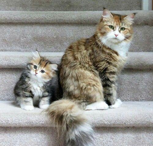 cat ♡: