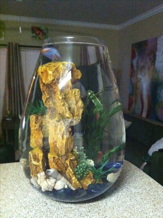 Pinterest the world s catalog of ideas for Fish tank bowl