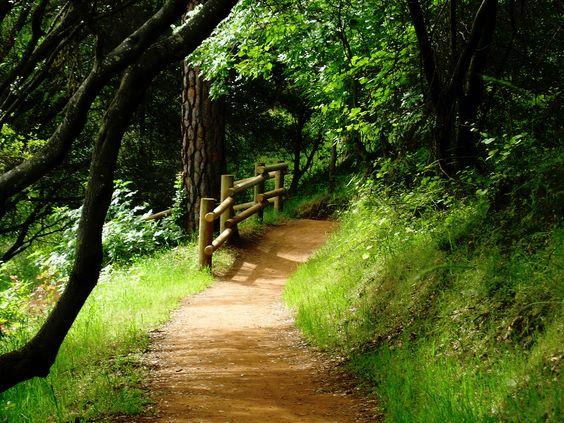 Hidden Falls Trail.  Auburn