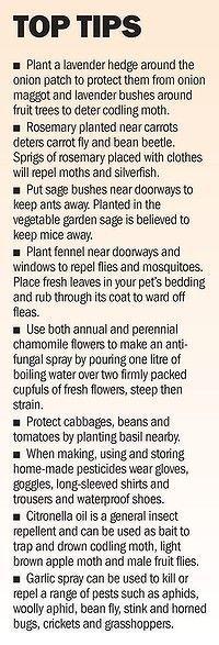 Garden Therapy: GARDENS-TIPS!