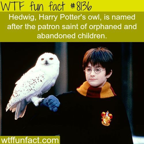 Harry Potter Facts Wtf Fun Facts Harry Potter Fun Facts Potter Facts Harry Potter Facts