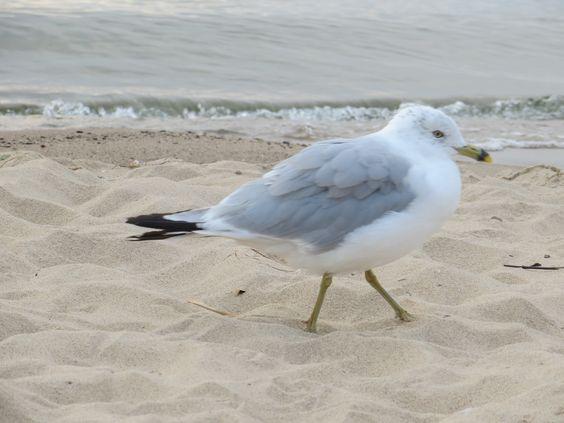 Gull Beach 8