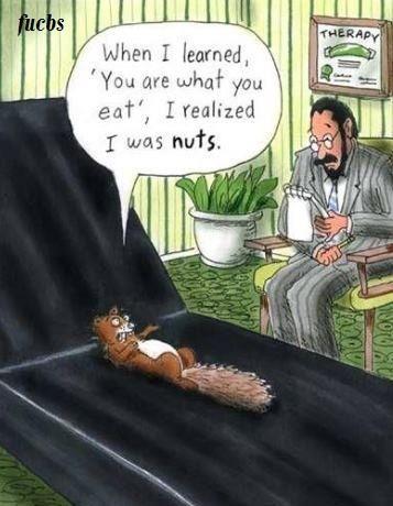 Squirrels!!!