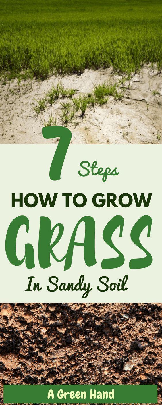 7 Steps On How To Grow Grass In Sandy Soil Lawncare Soilcare Sandysoil Gardening Agreenhand Growing Grass Planting In Sandy Soil Planting Grass