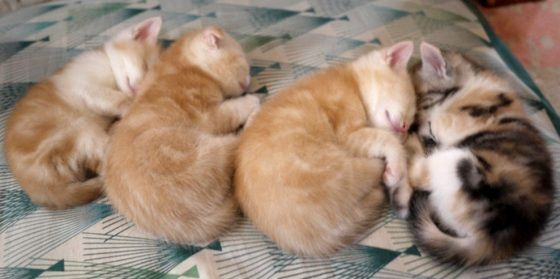 cute kittens napping together