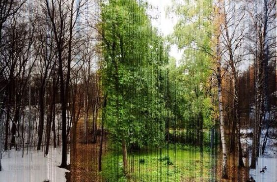 a picture in 365 slices and each slice is one day of the year