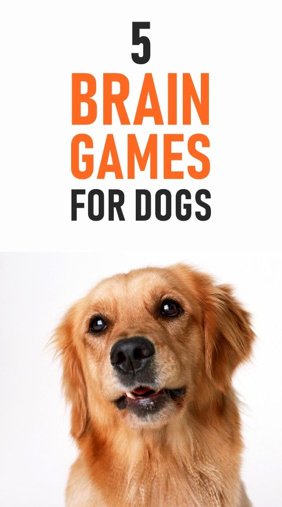 Looking For Some Ways To Keep Your Dog Busy Tired And Entertained