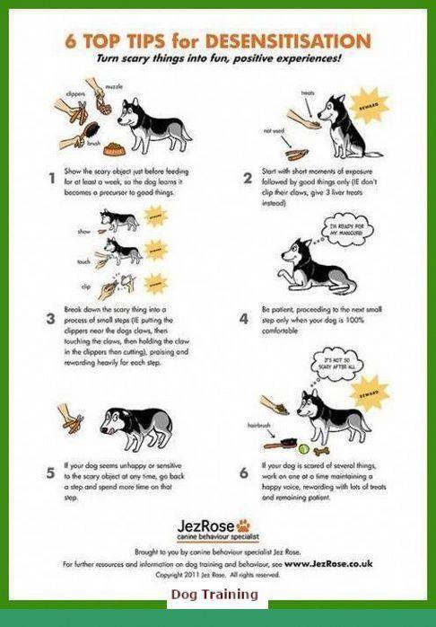 1 Off Leash Training Nyc And Dog Behavior Around Kittens