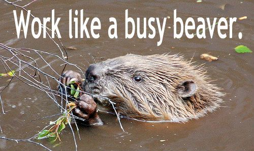 Work like a busy beaver -- 5 Effective Alternatives to Scolding - Inspirational Models