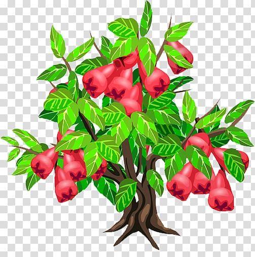 Java Apple Fruit Tree Strawberry Wax Apple Tree Transparent Background Png Clipart Apple Flowers Apple Tree Fruit Trees