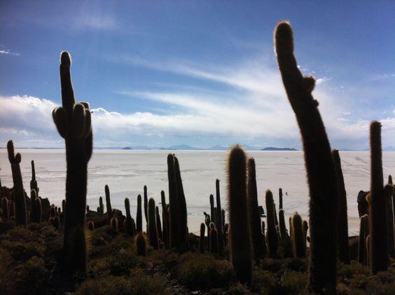 Cactus - salar de uyuni