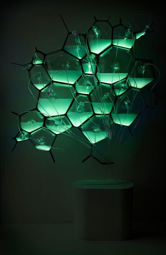 Philips Bio-light : des bactéries bioluminescentes pour éclairer la maison, 2011  Plus de découvertes sur Le Blog Domotique.fr #domotique #smarthome #homeautomation