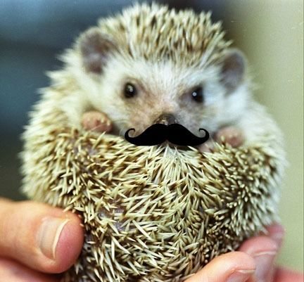 2 fave things: hedgehogs, and mustaches.: