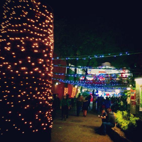 Coyoacán, Diciembre 2014, México D.F.