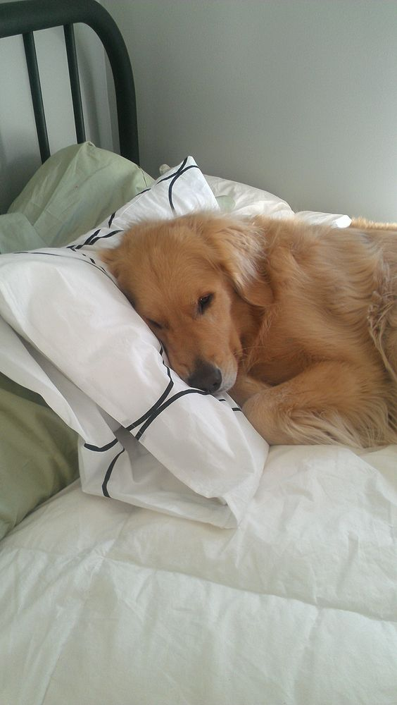 Cute Dog Pillow Beds : Pillows, The pillow and Dogs on Pinterest