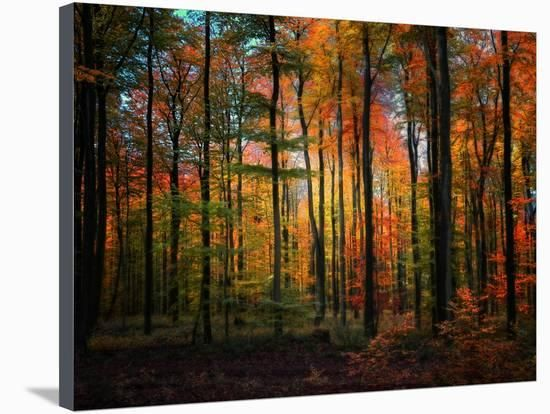 Crayons Photographic Print Philippe Sainte Laudy Art Com Pictures To Paint Wall Art Painting Scenic Art