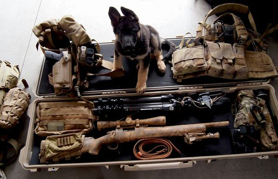 I'll take the dog and the Remington 700 too... Find our speedloader now!  http://www.amazon.com/shops/raeind