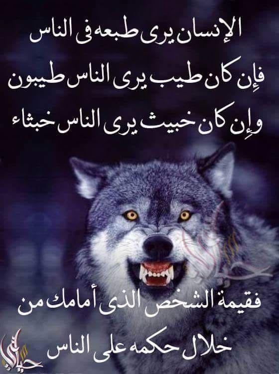 Pin By فلسطينية ولي الفخر On حقيقة Animals Dogs Husky