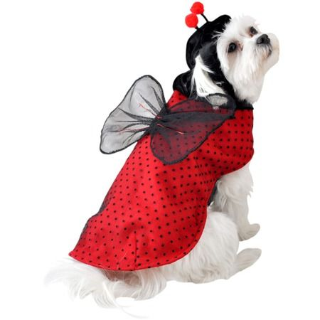 I pinned this Ladybug Dog Costume from the Halloween Tricks & Treats event at Joss and Main!