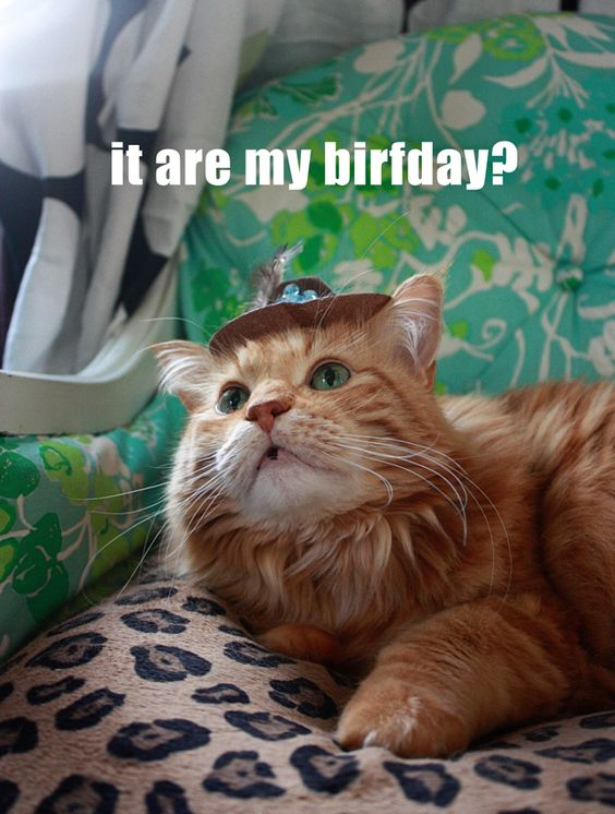 Lola's birthday hat.